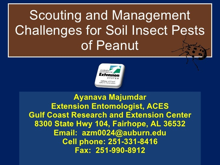 Scouting and Management Challenges for Soil Insect Pests of Peanut Ayanava Majumdar Extension Entomologist, ACES Gulf Coas...