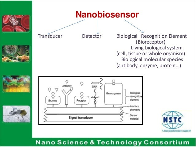 biosensors nano [80] reported a nano-tio2 based biosensor for the detection of lactate dehydrogenase (ldh) waxberry-like nanoscale zno balls, as shown in figure 8, can act as excellent materials for immobilization of enzymes and the rapid electron transfer agent for the fabrication of efficient biosensors due to the wide.