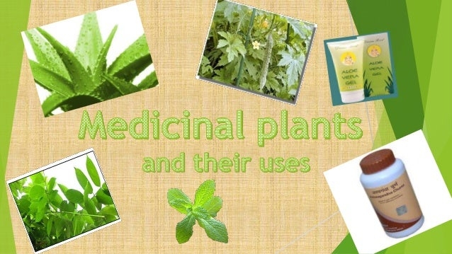 medicinal plants preparation and uses
