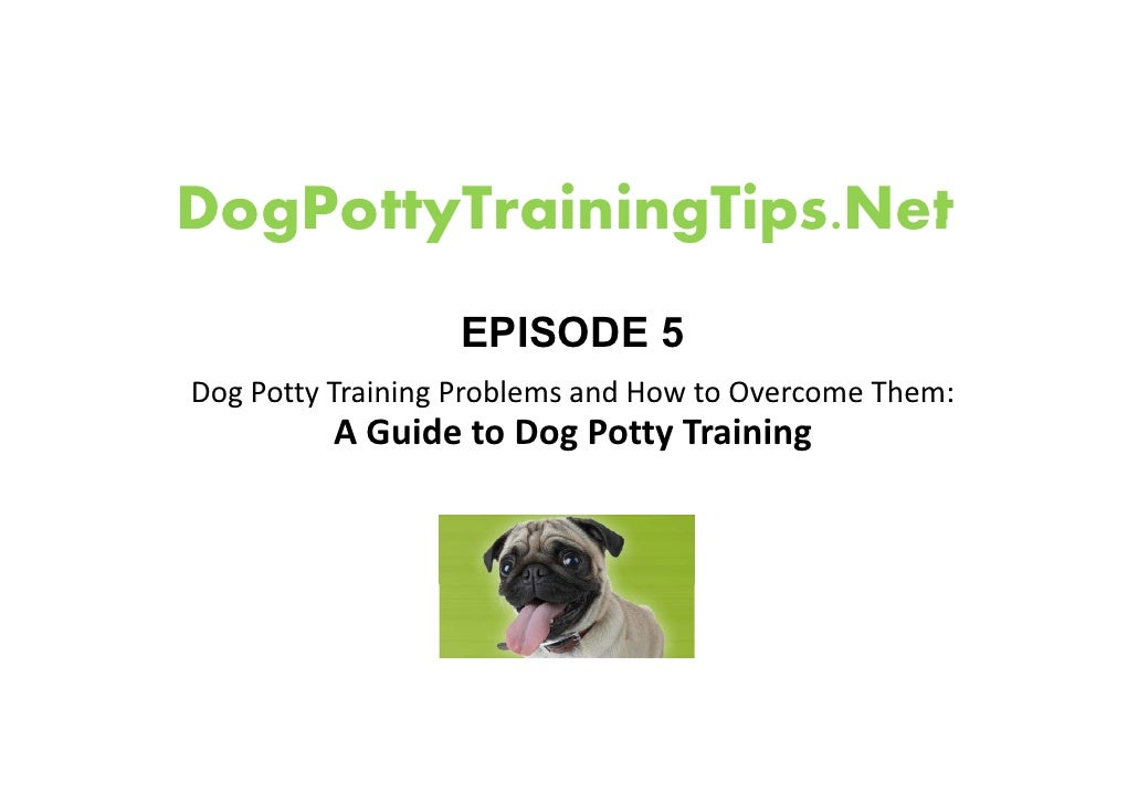 DogPottyTrainingTips.Net DogPottyTrainingTips Net                   EPISODE 5 Dog Potty Training Problems and How to Overc...