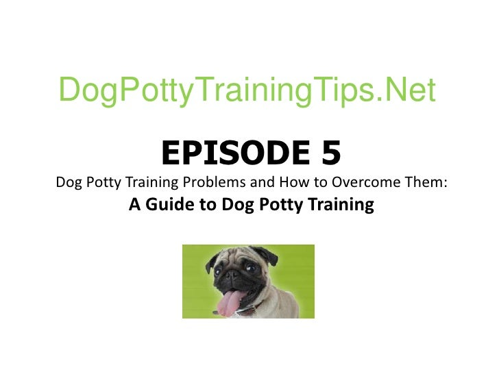 DogPottyTrainingTips.Net<br />EPISODE 5Dog Potty Training Problems and How to Overcome Them:A Guide to Dog Potty Training<...