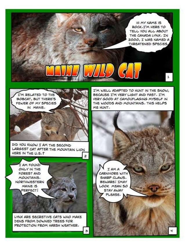 References Photo 1 Kilby, E., Moody lynx, November 16, 2010, via Flickr, Creative Commons attribution, http://www.flickr.c...