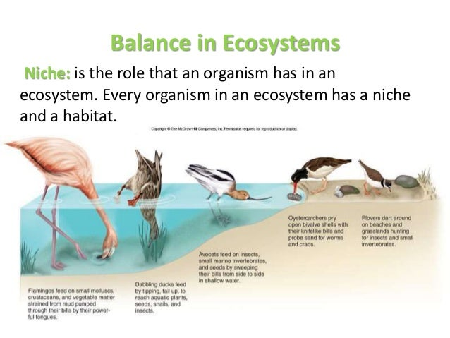 Ecosystems Science Kids