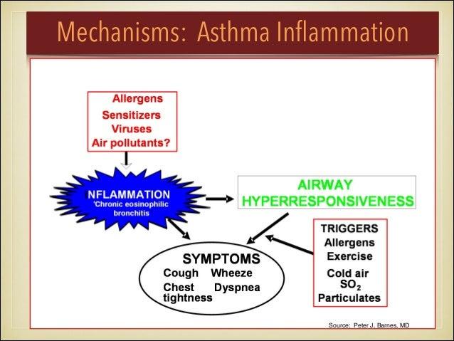Mechanisms: Asthma Inflammation Source: Peter J. Barnes, MD