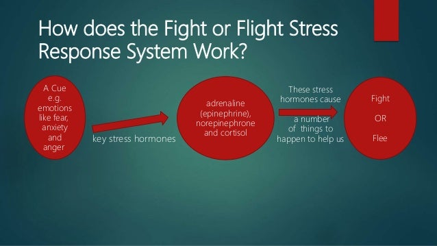 the fight or flight response can But you can fight back  cortisol also curbs functions that would be nonessential or detrimental in a fight-or-flight  the body's stress-response system is .