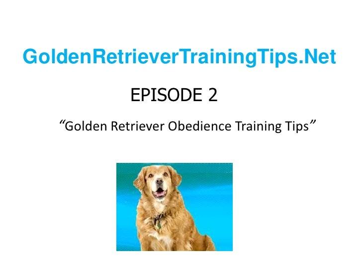 "GoldenRetrieverTrainingTips.Net<br />EPISODE 2""Golden Retriever Obedience Training Tips""<br />"