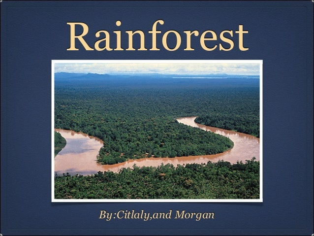 Rainforest  By:Citlaly,and Morgan