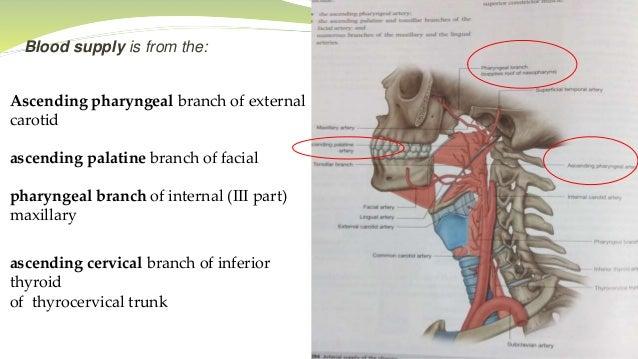 veins function