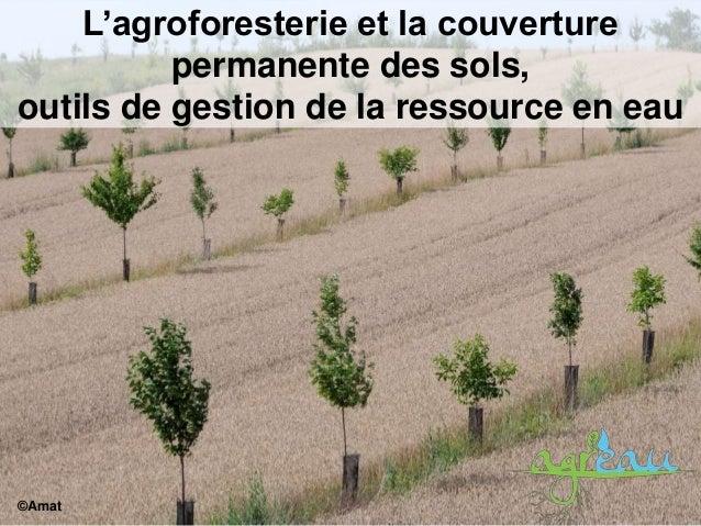 L'agroforesterie et la couverture permanente des sols, outils de gestion de la ressource en eau ©Amat