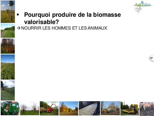  Pourquoi produire de la biomasse valorisable? NOURRIR LES HOMMES ET LES ANIMAUX 12