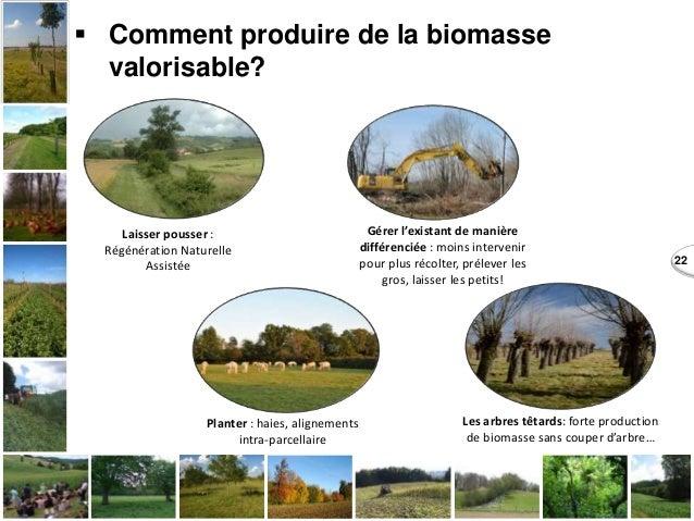22  Comment produire de la biomasse valorisable? Laisser pousser : Régénération Naturelle Assistée Planter : haies, align...