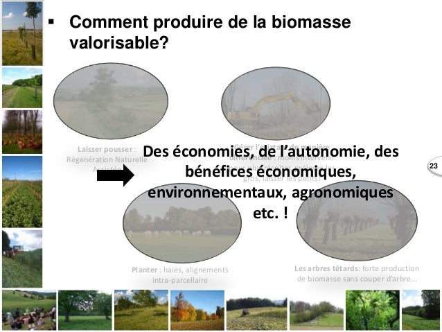 23  Comment produire de la biomasse valorisable? Laisser pousser : Régénération Naturelle Assistée Planter : haies, align...