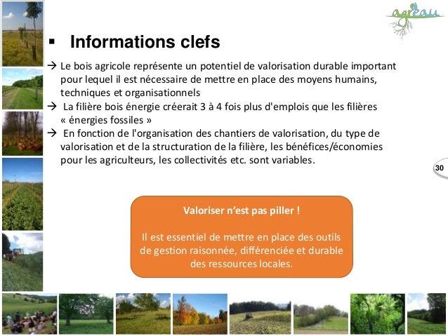 30  Informations clefs  Le bois agricole représente un potentiel de valorisation durable important pour lequel il est né...