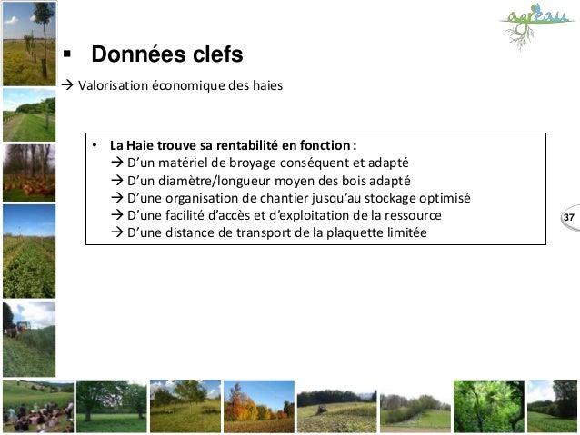 37  Données clefs  Valorisation économique des haies • La Haie trouve sa rentabilité en fonction :  D'un matériel de br...