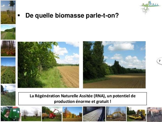  De quelle biomasse parle-t-on? 7 La Régénération Naturelle Assitée (RNA), un potentiel de production énorme et gratuit !