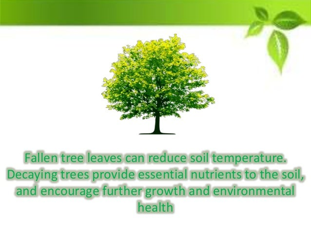 essay about importance of trees Importance and value of trees essay sample since the beginning, trees have furnished us with two of life's essentials, food and oxygen as we evolved, they provided additional necessities such as shelter, medicine, and tools.