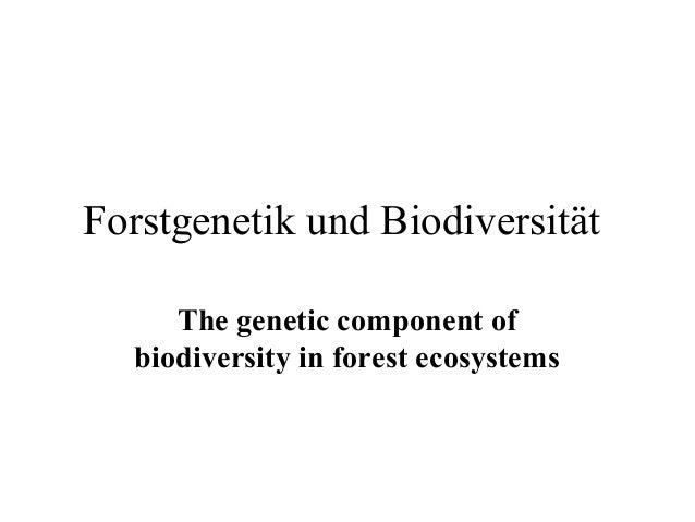 Forstgenetik und Biodiversität     The genetic component of  biodiversity in forest ecosystems