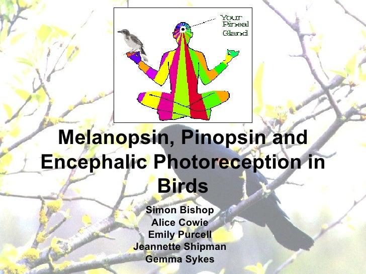 Melanopsin, Pinopsin and Encephalic Photoreception in Birds Simon Bishop Alice Cowie Emily Purcell Jeannette Shipman Gemma...