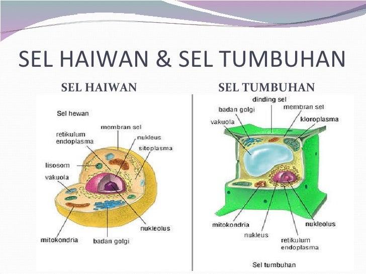 Presentation Biologi Sel Haiwan Dan Tumbuhan