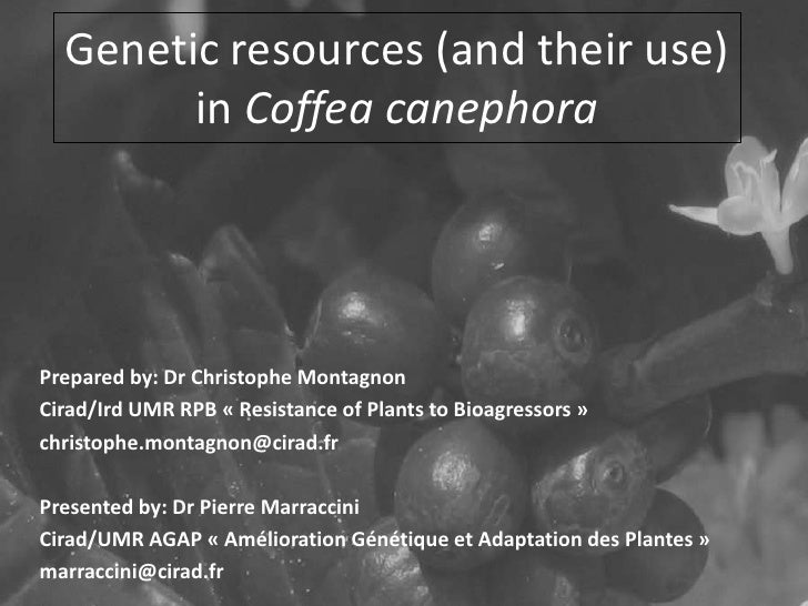 Genetic resources (and their use)                TITRE        in Coffea canephora         • Texte             – Texte     ...