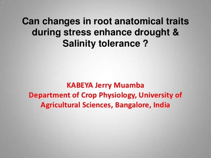 Can changes in root anatomical traits  during stress enhance drought &         Salinity tolerance ?            KABEYA Jerr...
