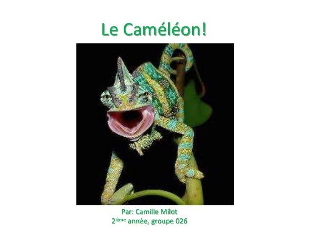 Le Caméléon!  Par: Camille Milot 2ième année, groupe 026