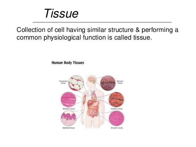 Presentation cell tissue and organ