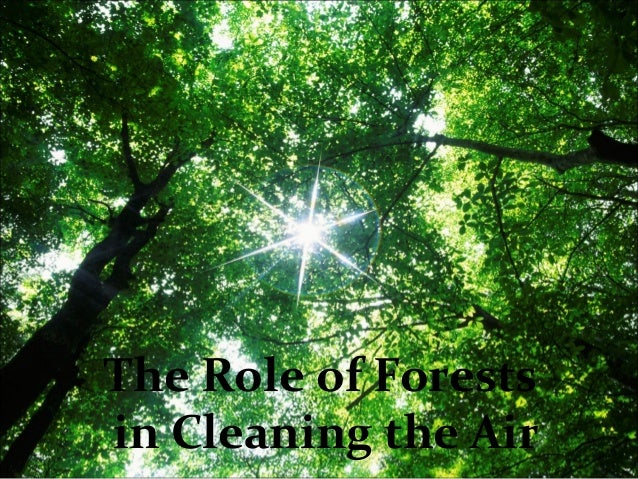 The Role of Forests in Cleaning the Air