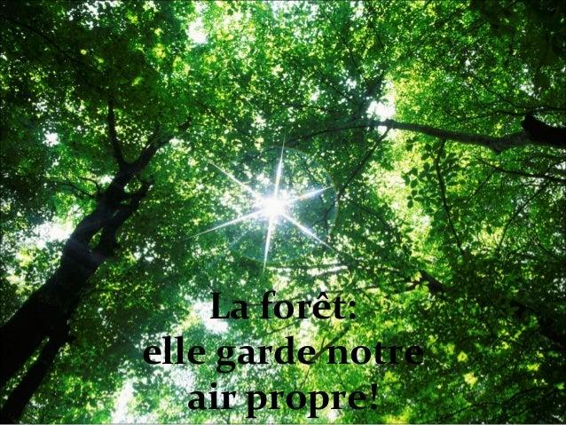 La forêt: elle garde notre air propre!
