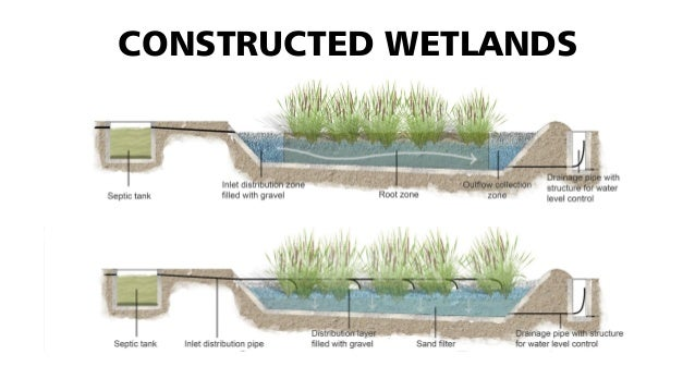 Constructed Wetlands Applied To The Region Of Curitiba And