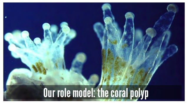 Our role model: the coral polyp