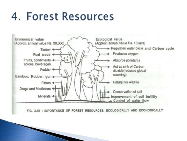 population growth and natural resources economic Impacts of population growth on water resources growing populations are faced with the harsh reality of limited natural resources  the issue of water supply is a good example to demonstrate that unrestrained population growth is not sustainable.