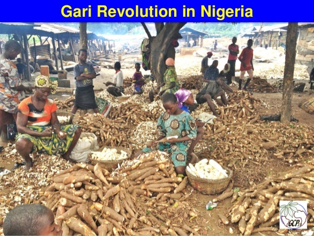 Global cassava partnership for the 21st century gcp21 a for Fish n gari