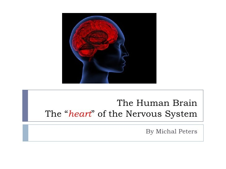 """The Human Brain The """" heart """" of the Nervous System By Michal Peters"""