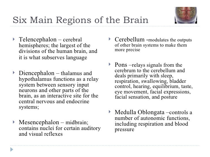 Six Main Regions of the Brain <ul><li>Telencephalon –  cerebral hemispheres; the largest of the divisions of the human bra...