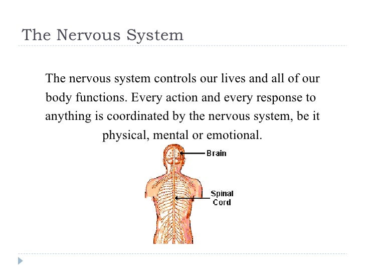 The Nervous System <ul><li>The nervous system controls our lives and all of our </li></ul><ul><li>body functions. Every ac...