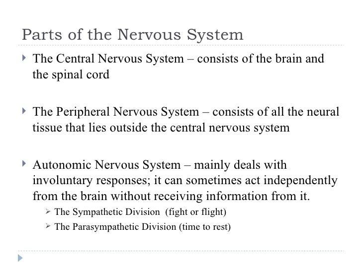 Parts of the Nervous System <ul><li>The Central Nervous System – consists of the brain and the spinal cord </li></ul><ul><...