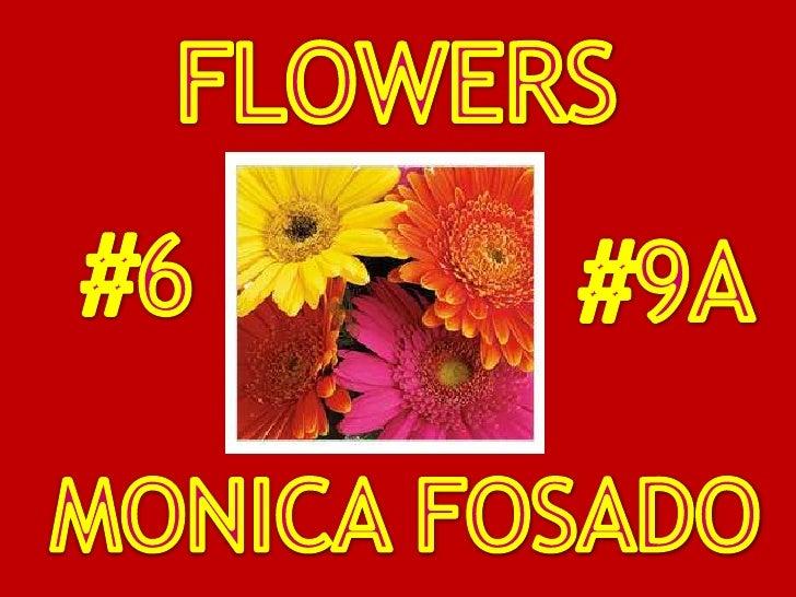 FLOWERS<br />#6<br />#9A<br />MONICA FOSADO<br />