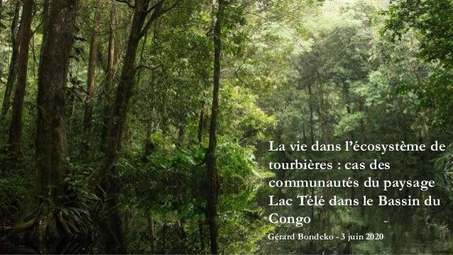 La vie dans l'écosystème de tourbières : cas des communautés du paysage Lac Télé dans le Bassin du Congo Gérard Bondeko - ...