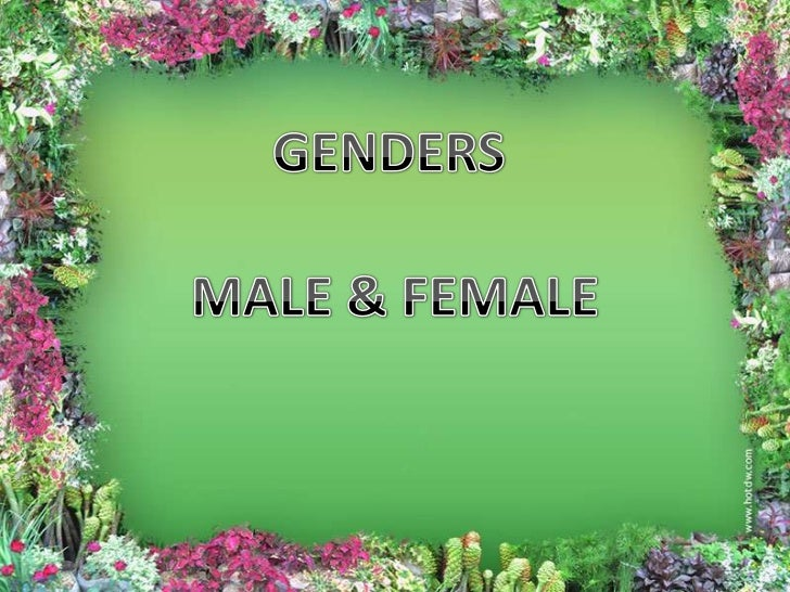 GENDERS<br />MALE & FEMALE<br />