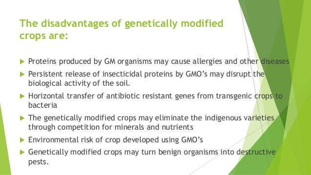 Disadvantages of genetically modified foods essay