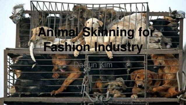 Animal Skinning for Fashion Industry DaEun Kim photo credit: peta.org