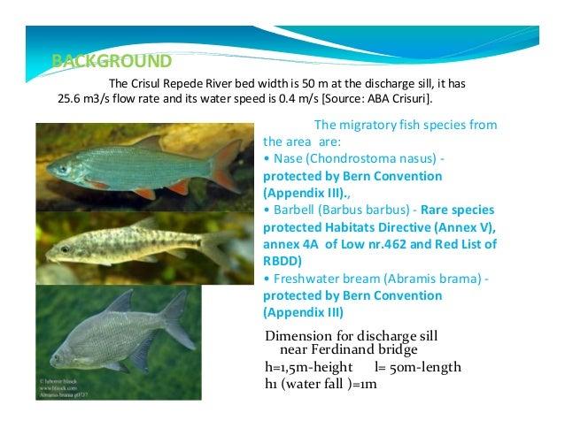 Madison fish passage conference presentation 2 razvan for H m fish count