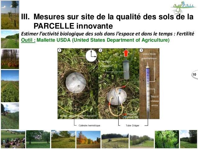 10 III. Mesures sur site de la qualité des sols de la PARCELLE innovante Estimer l'activité biologique des sols dans l'esp...
