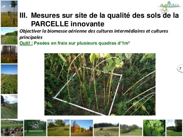7 III. Mesures sur site de la qualité des sols de la PARCELLE innovante Objectiver la biomasse aérienne des cultures inter...