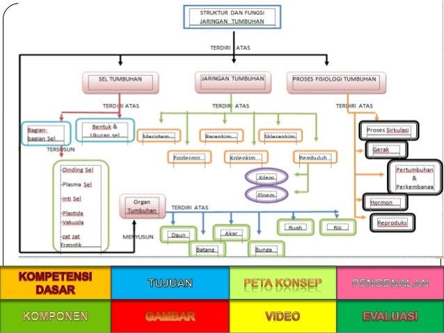Ppt struktur dan fungsi jaringan pada tumbuhan sel tumbuhan jaringan tumbuhan organ tumbuhan proses fisiologi pada tumbuhan 6 ccuart Images
