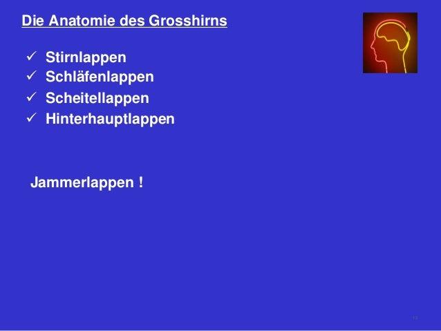 Die Anatomie des Grosshirns  Stirnlappen  Schläfenlappen  Scheitellappen  Hinterhauptlappen Jammerlappen ! 12