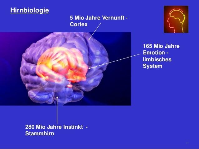 Hirnbiologie 280 Mio Jahre Instinkt - Stammhirn 165 Mio Jahre Emotion - limbisches System 5 Mio Jahre Vernunft - Cortex 57