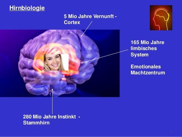 Hirnbiologie 280 Mio Jahre Instinkt - Stammhirn 165 Mio Jahre limbisches System Emotionales Machtzentrum 5 Mio Jahre Vernu...
