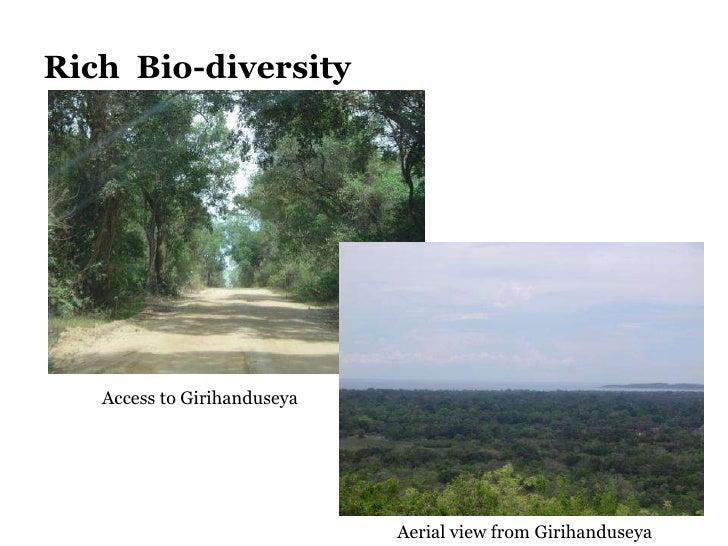 Rich  Bio-diversity Access to Girihanduseya Aerial view from Girihanduseya